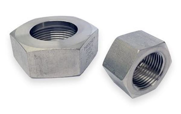 Picture for category Hosetail Nut